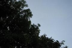 04-07-2009_ 002